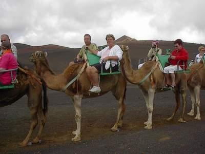 strand fuerteventura kameel